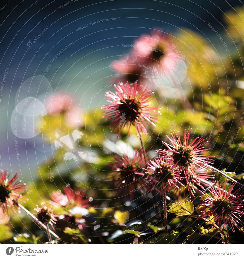 Blümchen am Teich Sommer Garten Natur Wasser Pflanze Blume Blühend Erholung Wachstum stachelig blau grün rot Gartenteich Stachel Reflexion & Spiegelung Farbfoto