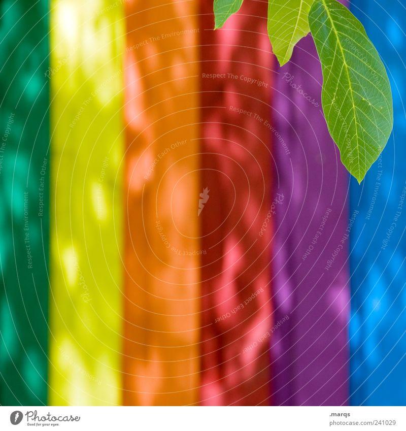 Blatt schön Pflanze Farbe Wand Holz Mauer hell leuchten Streifen einfach mehrfarbig Grünpflanze spektral regenbogenfarben