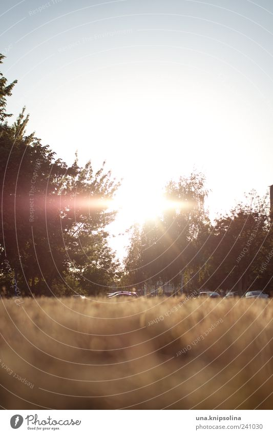 sun.day Natur Baum ruhig Landschaft Erholung Umwelt Wiese Wärme Schönes Wetter Sonnenuntergang