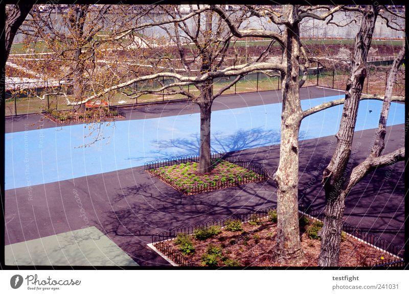 at long last blau Baum Garten Park Platz eckig Sportstätten