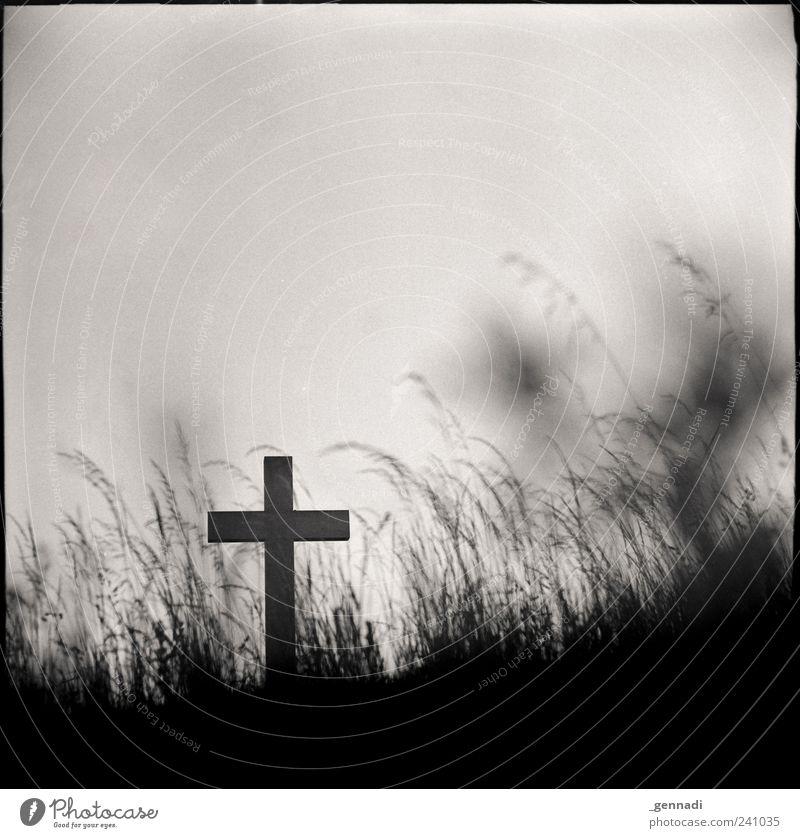 Frieden finden Urelemente Erde Wolkenloser Himmel Gras authentisch historisch Kreuz Christentum Tod Glaube heilig kreuzigen Traurigkeit Trauer Getreide analog