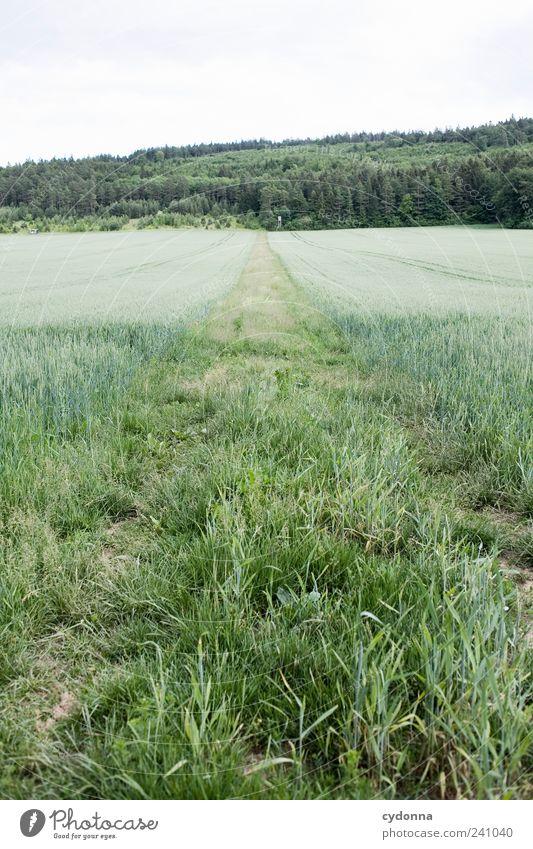 /\ Himmel Natur Sommer Einsamkeit ruhig Erholung Wald Ferne Umwelt Landschaft Wiese Leben Gras Wege & Pfade Freiheit träumen