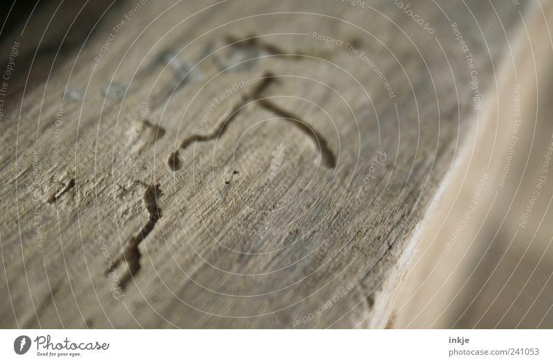 wenn man genauer hingesehen hätte... Natur alt Holz Linie braun kaputt Wandel & Veränderung Vergänglichkeit Verfall Zerstörung Wurm Fährte Detailaufnahme Balken Dachgebälk gefräßig