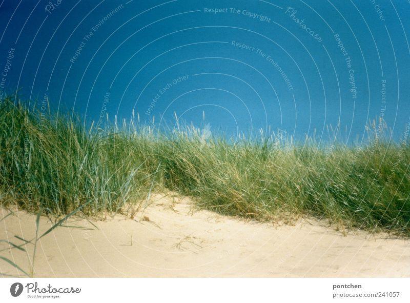 Dünen Himmel Natur blau Ferien & Urlaub & Reisen grün Pflanze Sommer Strand Landschaft Küste Sand Schönes Wetter Sommerurlaub Wolkenloser Himmel Grünpflanze