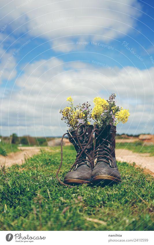 alte Stiefel gefüllt mit Wildblumen im Freien Umwelt Natur Landschaft Pflanze Himmel Frühling Sommer Schönes Wetter Blume Gras Grünpflanze Wildpflanze