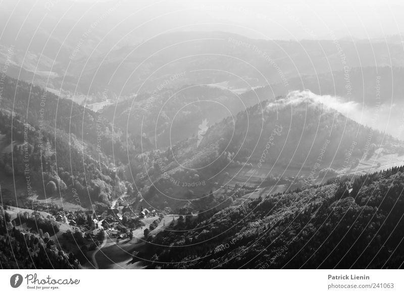 Schwarzer Wald Freizeit & Hobby Ferien & Urlaub & Reisen Tourismus Ausflug Ferne Freiheit Umwelt Natur Landschaft Pflanze Urelemente Himmel Wolken Wetter Nebel