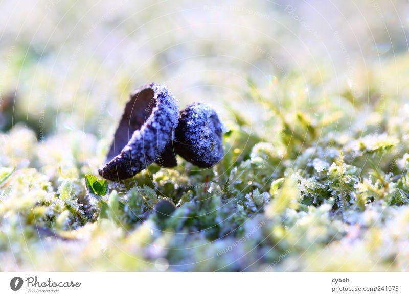 eisig Natur weiß Pflanze Einsamkeit kalt Herbst hell Eis Erde Frost Moos Raureif Waldboden Eicheln
