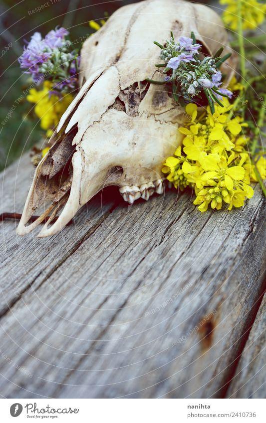 Nahaufnahme eines mit Blumen gefüllten Tierschädels Design exotisch Natur Pflanze Wildpflanze Wildtier Totes Tier Hirsche 1 Knochen Holz alt dreckig Duft