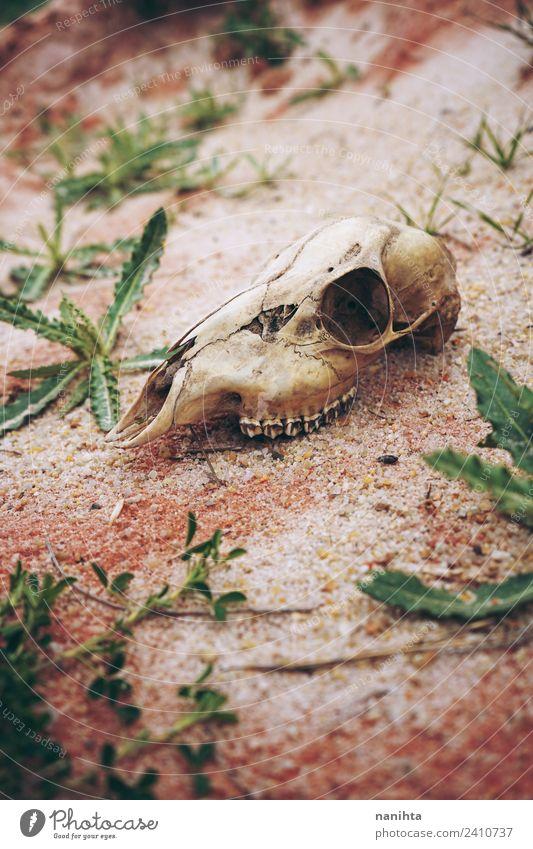 Natur alt Pflanze Tier Umwelt natürlich Tod braun Sand wild Erde dreckig Wildtier Wachstum Perspektive einzigartig
