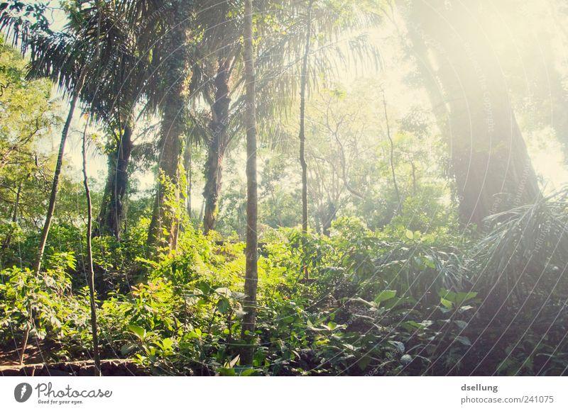 Bali III Umwelt Natur Landschaft Pflanze Sommer Baum Sträucher Moos Grünpflanze Wildpflanze Wald Urwald Insel gigantisch groß gelb grün Indonesien Affenwald