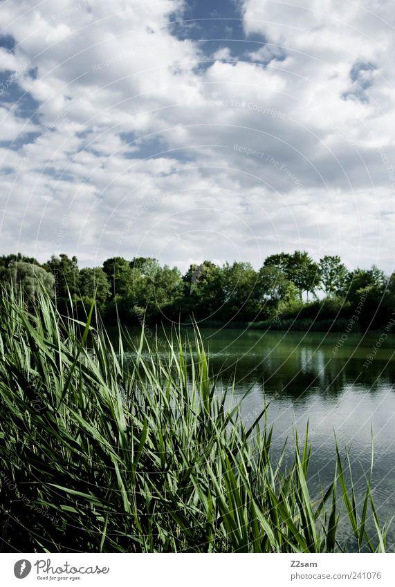 tag am see Lifestyle Natur Landschaft Himmel Wolken Gewitterwolken Sommer Pflanze Schilfrohr Seeufer ästhetisch dunkel blau grün Einsamkeit Erholung