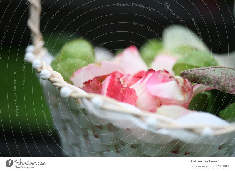 Streublumen Blume grün rosa weiß Warmherzigkeit Romantik ästhetisch Duft Farbe Nostalgie Rose Rosenblätter Korb Körbchen Sommer Farbfoto Außenaufnahme