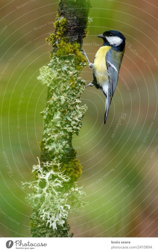 Natur Pflanze grün Baum Tier Wald gelb Umwelt natürlich Holz Vogel Wildtier Spanien Wissenschaften Umweltschutz Ornithologie