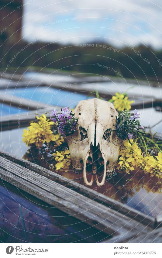 Tierschädel mit Blumen über einem alten Fenster Stil Design Halloween Umwelt Natur Wildpflanze Wildtier Totes Tier Knochen 1 Holz Glas Kristalle dreckig