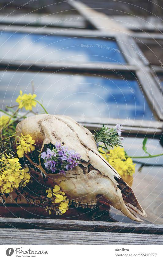 Natur alt schön Blume Tier Fenster Religion & Glaube Frühling natürlich Holz Stil Zeit Tod Design dreckig Wildtier