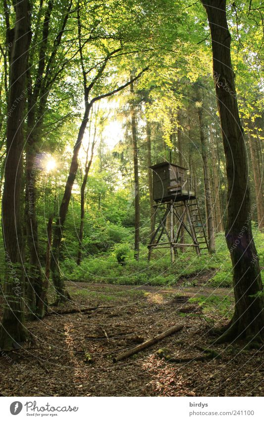 Waldeslust Jagd Natur Pflanze Sonnenlicht Sommer Schönes Wetter natürlich grün ruhig Frieden Gegenlicht Sonnenaufgang Hochsitz Fußweg Blätterdach Baum Blatt