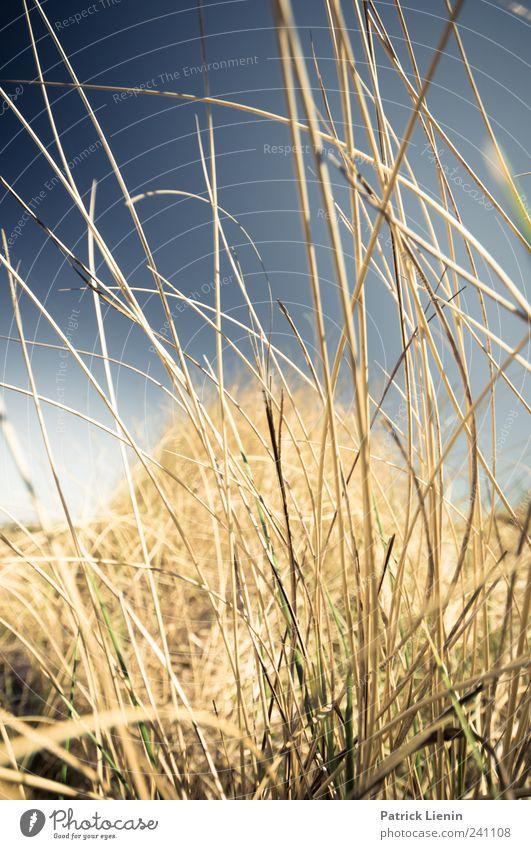 Das Meer rauscht Himmel Natur Ferien & Urlaub & Reisen Pflanze Sommer Strand Ferne Umwelt Landschaft Küste Freiheit Luft Wetter Freizeit & Hobby Insel
