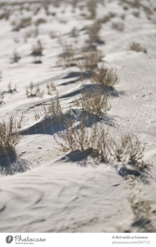 Spiekeroog l Brokeback Mountain Natur Pflanze Sommer Meer Strand Umwelt Landschaft Gras Küste Sand Klima außergewöhnlich Wachstum authentisch einzigartig