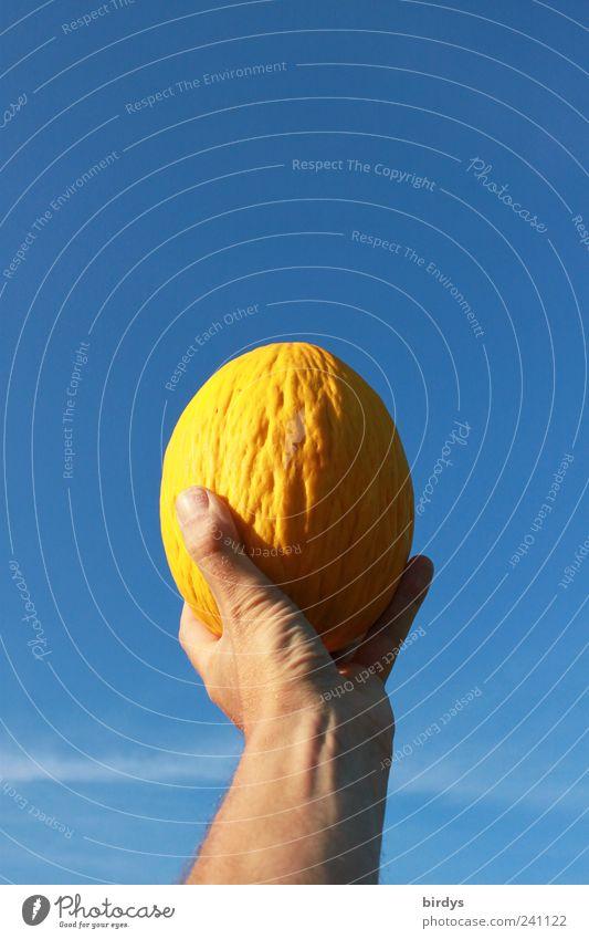 Gelb trifft Blau Arme Hand Himmel Wolkenloser Himmel Sommer Schönes Wetter ästhetisch frisch blau gelb Warmherzigkeit Farbe Melonen hochhalten festhalten