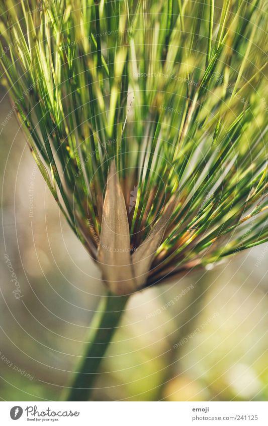 green Natur grün Pflanze Gras frisch Stengel Halm