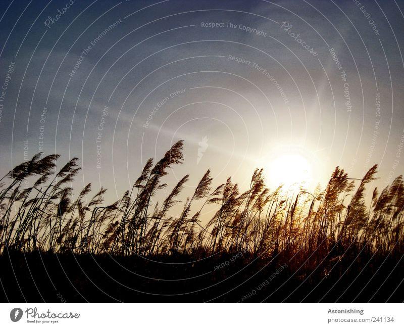 im Wind Natur Himmel Sonne blau Pflanze schwarz Wiese Gras Wärme Landschaft Luft braun Feld Wind Wetter Umwelt