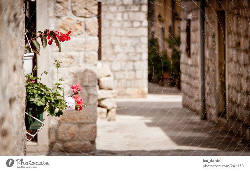 Ston II in Kroatien Ferien & Urlaub & Reisen Pflanze Sommer Haus Wand Architektur Wege & Pfade Stein Mauer Blüte Gebäude rosa Fassade Ausflug Tourismus