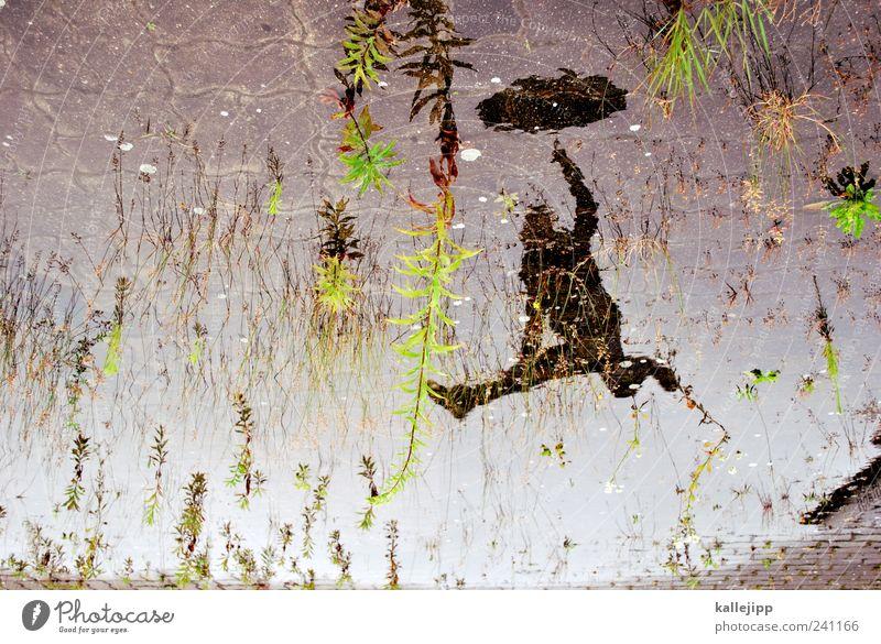 luftfeuchtigkeit Mensch Himmel Mann Natur Wasser Pflanze Erwachsene Umwelt Leben springen Wetter maskulin Regenschirm Regenwasser Pfütze schlechtes Wetter