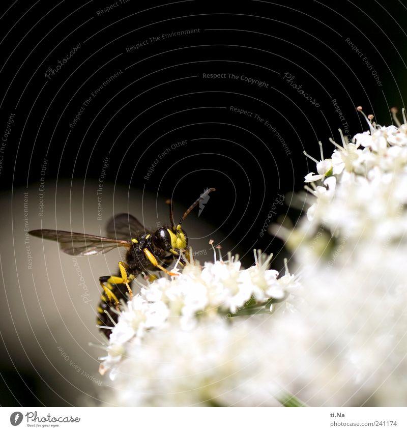 Moin Natur weiß Pflanze Tier schwarz Umwelt gelb Wiese klein hell Wildtier wild authentisch Flügel Freundlichkeit Insekt