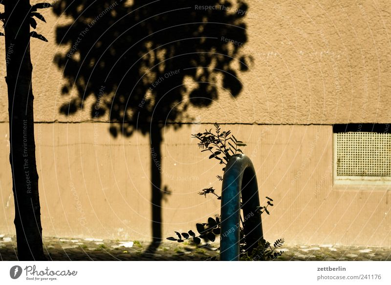 Wedding Pflanze Sommer Baum Einsamkeit Haus Fenster Straße Wand Architektur Wege & Pfade Gebäude Mauer Fassade Klima Schönes Wetter Sehnsucht