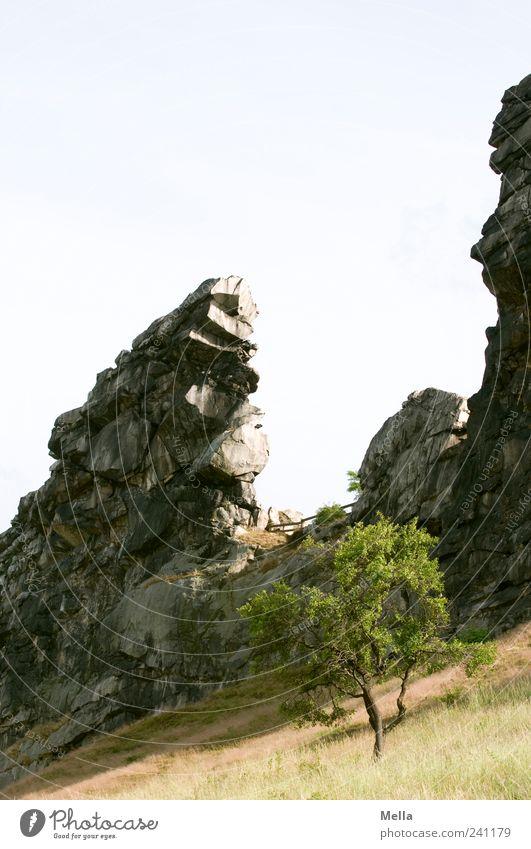 Teufelsmauer Natur Baum Wiese Berge u. Gebirge Stein Landschaft Umwelt Felsen stehen natürlich fest außergewöhnlich bizarr Klippe