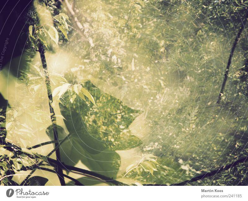vorm fenster Natur grün Baum Pflanze Blatt Wald gelb Wärme Gefühle träumen braun Stimmung wild Wachstum ästhetisch Sträucher