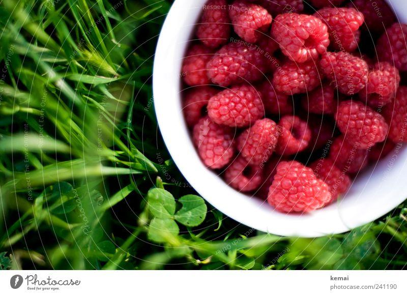 Eine Schale voller Beeren Natur grün weiß Sommer Pflanze rot Farbe Blatt Wiese Gras Gesundheit Frucht Lebensmittel frisch Ernährung lecker