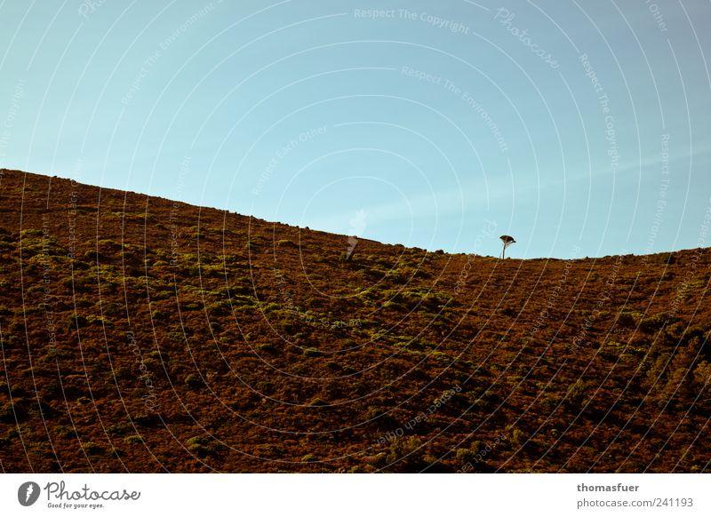 Pinie auf Korsika Landschaft Urelemente Erde Luft Wolkenloser Himmel Schönes Wetter Baum Hügel Berge u. Gebirge blau braun Gefühle Ausdauer Hoffnung Einsamkeit