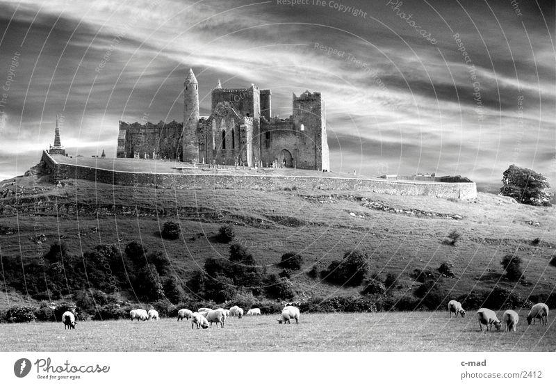 Rock of Cashell in Irland Wolken Wiese Schaf Gras Stimmung Bauwerk Hügel Republik Irland rasenmähen Schwarzweißfoto Burg oder Schloss Kloster Berge u. Gebirge