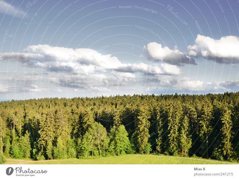 Schönes Wetter Umwelt Natur Landschaft Himmel Wolken Klima Baum Wiese Wald grün Schwarzwald Tanne Farbfoto mehrfarbig Außenaufnahme Menschenleer