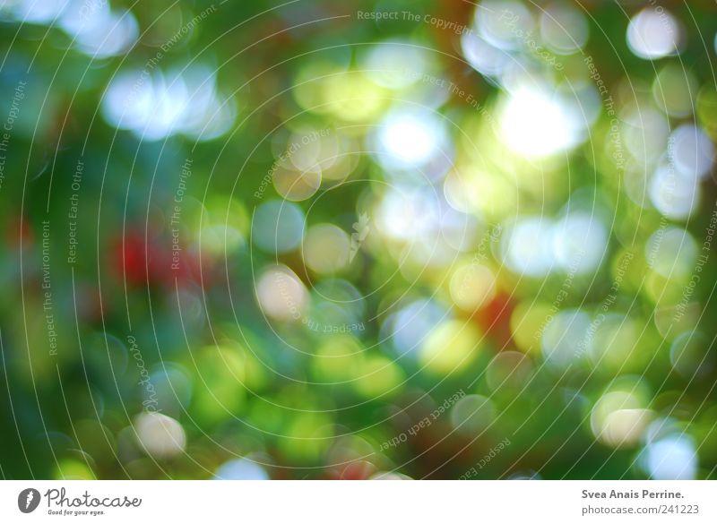 Kirschbaum. Umwelt Natur Pflanze Schönes Wetter Freundlichkeit Lichtpunkt Unschärfe Farbfoto mehrfarbig Außenaufnahme Menschenleer Textfreiraum abstrakt