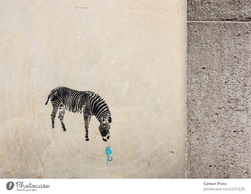 yummy blau Blume Tier Einsamkeit Graffiti Wand Stein Mauer Wildtier wild süß einzigartig Appetit & Hunger entdecken Teilung Fressen