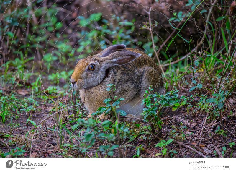 Wilder Hase ;-) Natur Landschaft Erholung Tier Wald Umwelt Gras Ausflug Erde Wildtier sitzen Abenteuer genießen Sträucher beobachten entdecken