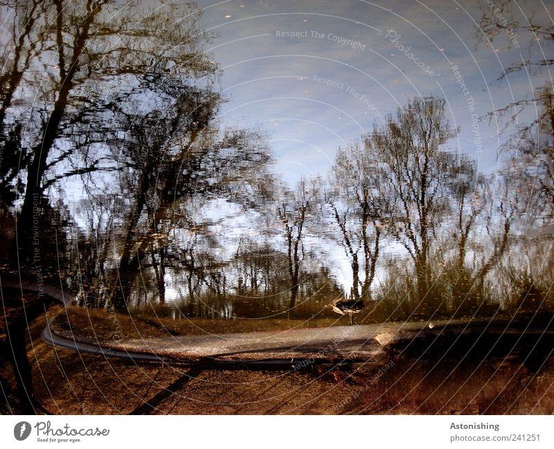 Teich im Park Umwelt Natur Landschaft Pflanze Wasser Himmel Sommer Wetter Schönes Wetter Baum Garten Wiese Wald Seeufer blau braun Türkenschanzpark Wien Stein