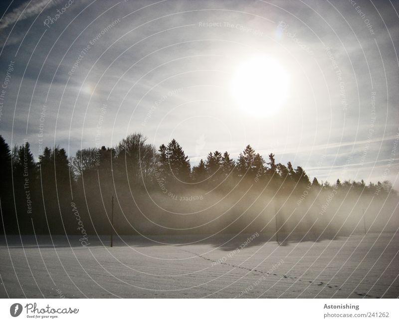 Sonne und Nebel Umwelt Natur Landschaft Pflanze Luft Himmel Wolken Sonnenlicht Winter Klima Wetter Schönes Wetter schlechtes Wetter Schnee Baum Wald blau grau