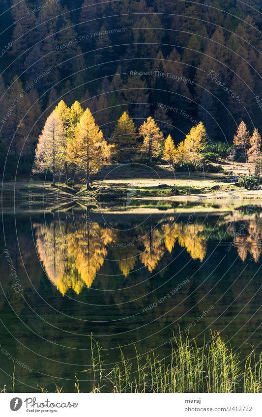 Herbstliche Spiegelung Natur Wald Leben Traurigkeit See leuchten träumen Schönes Wetter Vergänglichkeit Wandel & Veränderung Trauer Jahreszeiten harmonisch Ende