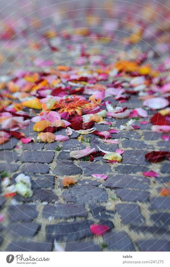 Blütenträume Glück Feste & Feiern Blume Rose Blatt Blütenblatt Straße Straßenbelag Bürgersteig Stein liegen verblüht Duft mehrfarbig grau Gefühle Freude
