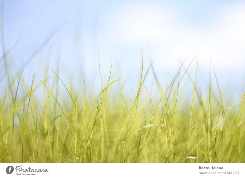 Sanftes Erwachen Natur Himmel weiß grün blau Sommer ruhig Wolken Wiese Gras Glück Luft Stimmung hell warten ästhetisch