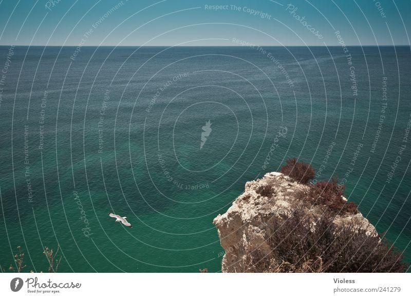 infinite far Natur blau Wasser Ferien & Urlaub & Reisen grün Erholung Ferne Landschaft Horizont Felsen Bucht Möwe Portugal Atlantik Meer Algarve