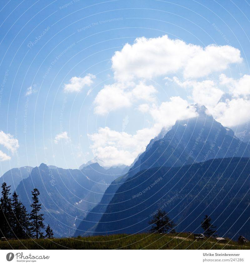 Auffi muas i Natur Landschaft Luft Himmel Wolken Sommer Schönes Wetter Baum Gras Alpen Berge u. Gebirge Watzmann Gipfel groß hoch Spitze Bergkette massiv