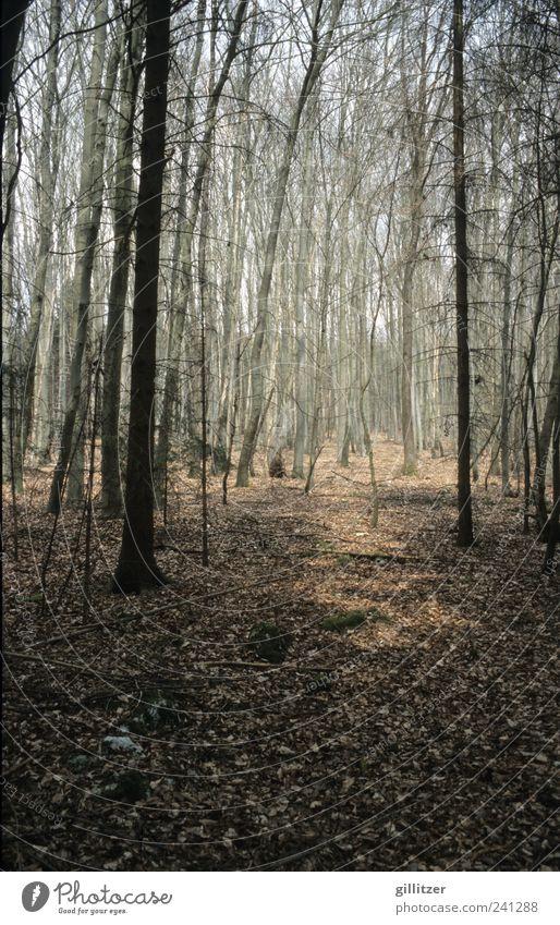Wald bei Weltenburg Natur Baum Pflanze ruhig Erholung Ferne Umwelt Landschaft Herbst grau hell braun Stimmung Erde Zufriedenheit