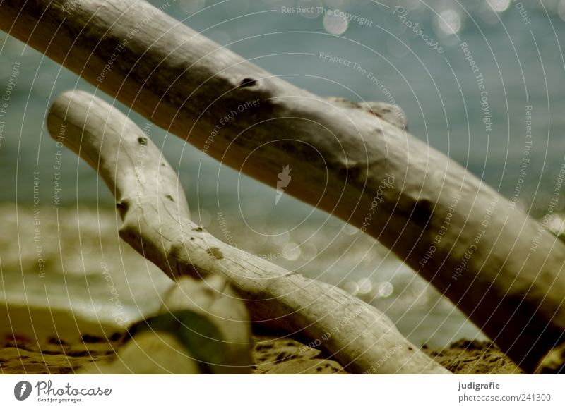 Weststrand Umwelt Natur Landschaft Wasser Baum Küste Strand Ostsee Meer Darß natürlich wild Stimmung Vergänglichkeit Farbfoto Außenaufnahme Menschenleer