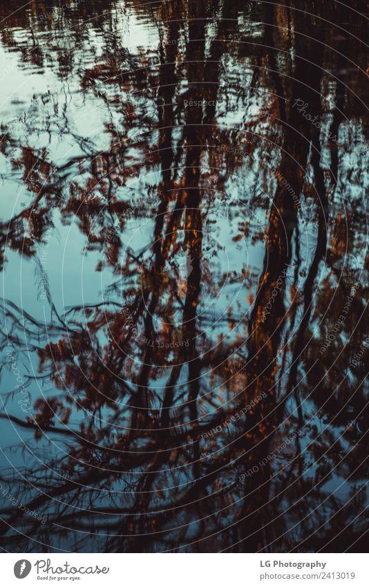 Wasserreflexion mit Bäumen Blätter Herbst schön Tapete Umwelt Natur Pflanze Himmel Wetter Regen Baum Blatt Park Wald Tropfen alt hell nass natürlich blau braun