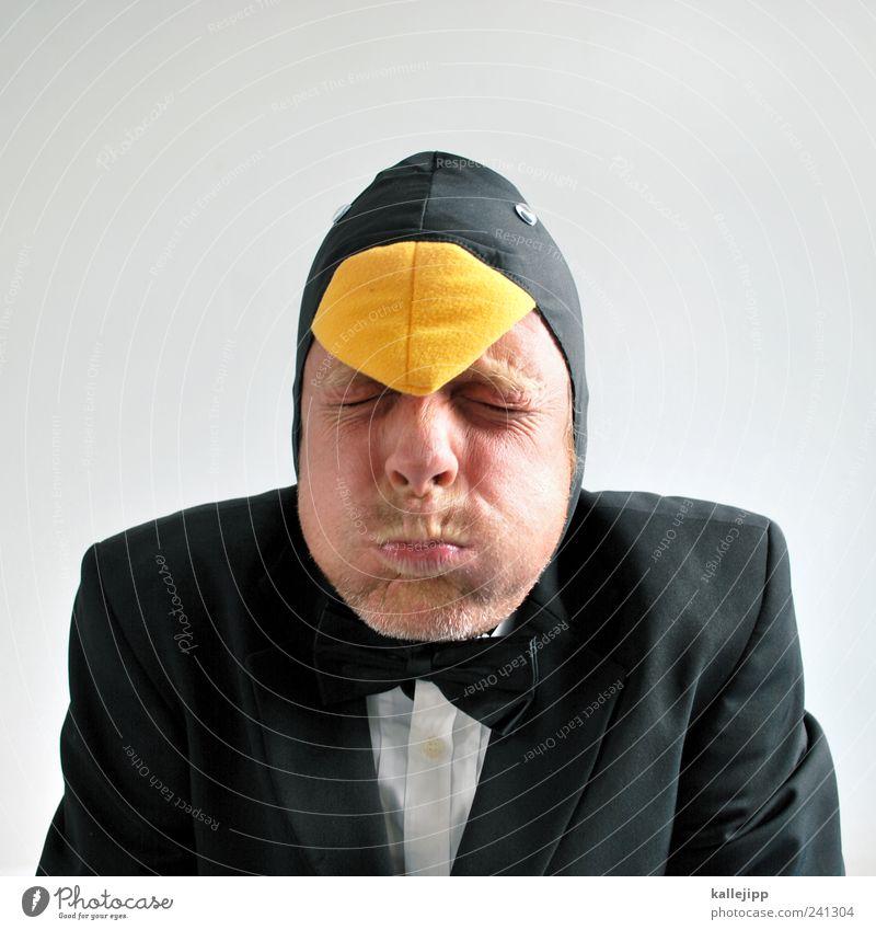 born this way Feste & Feiern Karneval Mensch maskulin Mann Erwachsene Kopf 1 30-45 Jahre Bekleidung Hemd Anzug Stoff Mütze Tier Vogel Pinguin kalt Fliege