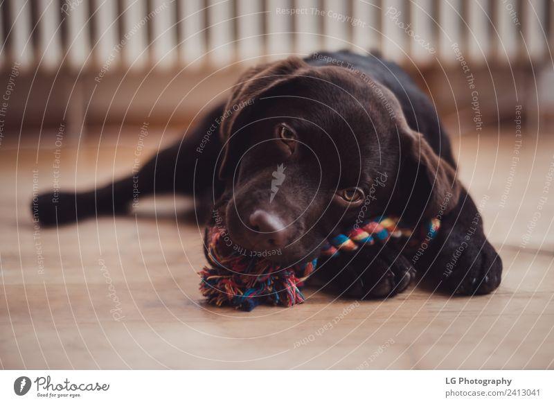 Hund Schön Tier Lustig Ein Lizenzfreies Stock Foto Von Photocase